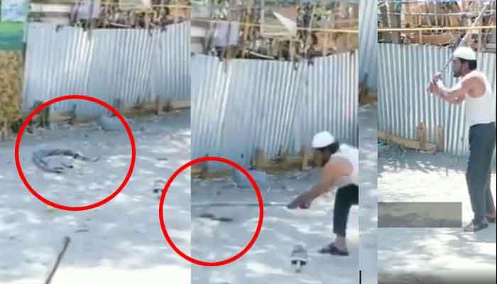 Photo of वीडियो:  क्रूरता की हद: 'प्रेम लीला' में लीन, नाग-नागिन के फर्से से दो टुकड़े कर दिए, बेटा बोला अब्बू कमाल कर दिया
