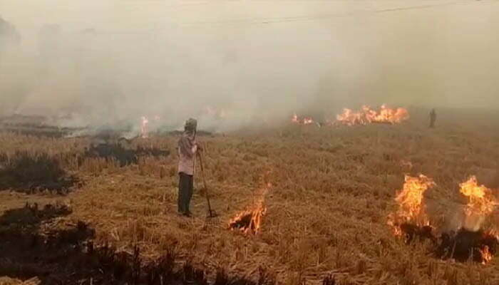 Burning the standing crop of the field with fire of straw