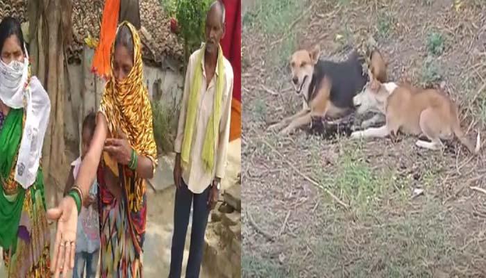 Raipur Saddu, half-dead corpse dog eating corona dies
